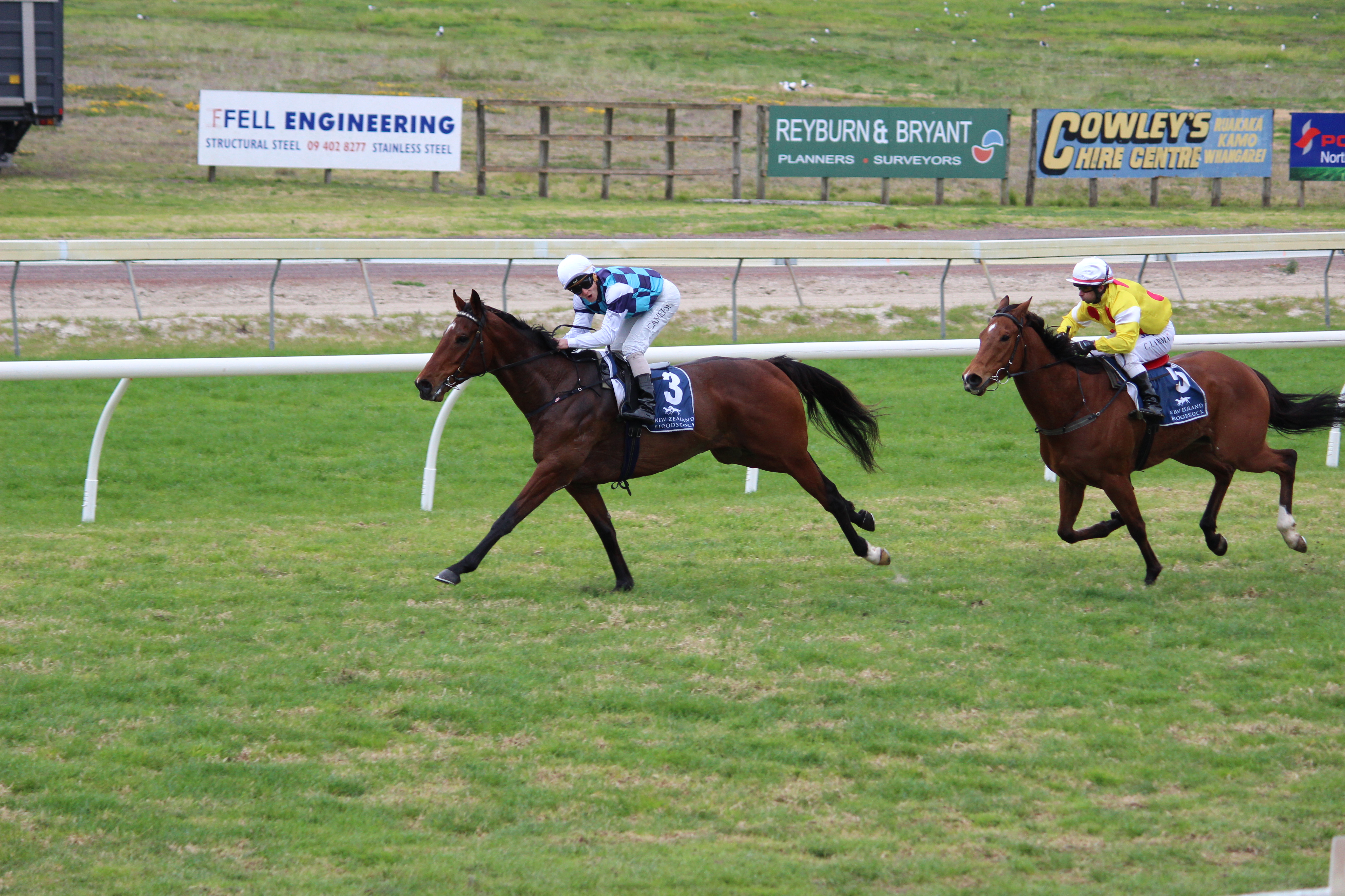 LOGAN RACING HAVE FIVE  RUNNERS AT RUAKAKA  ON SEPTEMBER 30TH