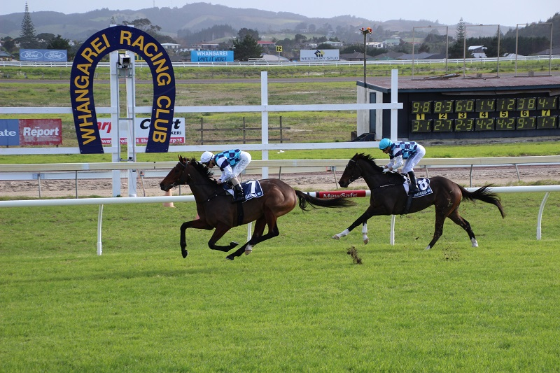 19 RUNNERS AT RUAKAKA FOR LOGAN RACING STABLES ON SATURDAY 9TH JULY