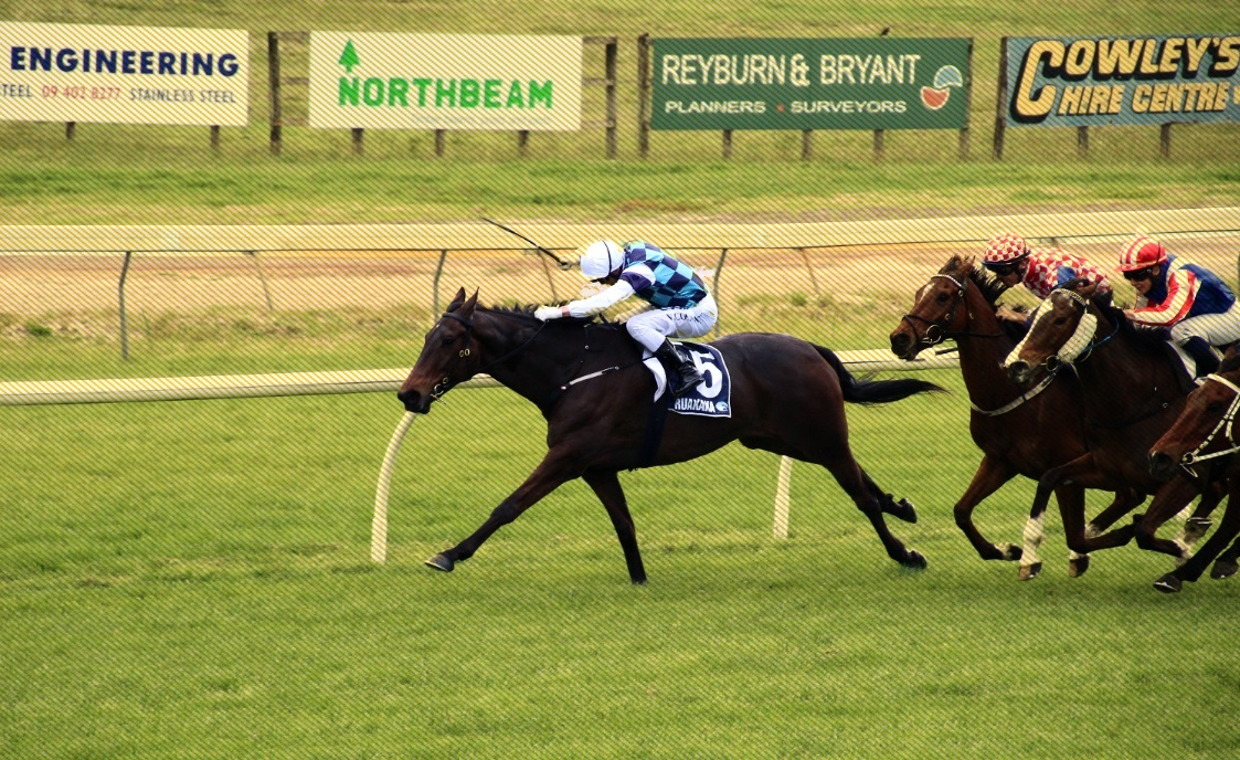 RUNNERS PREVIEW ON 3-MAY PUKEKOHE