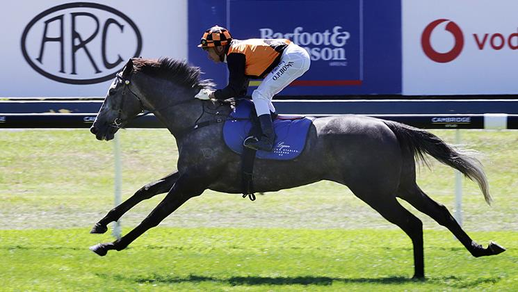 LOGAN RACING RUNNERS PREVIEW FOR HASTINGS & RUAKAKA ON SATURDAY 31ST AUGUST